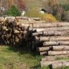 Il legno come fonte per l'industria