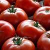 Pomodori più grandi, più polposi e più saporiti grazie alla ricerca