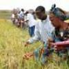 Lo sviluppo dell'agricoltura africana: obiettivo primario dei leader degli stati africani.