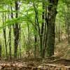 Controllo del territorio rurale e forestale