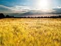 Agronomi nel mondo: racconto di Luigi Rossi