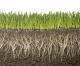 Metagenomica: una nuova frontiera anche nello studio del suolo