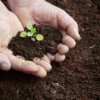 5 reasons why soil is key to the planet's sustainable future