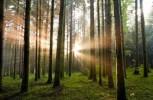 Piantare alberi in Italia per il benessere del pianeta. Dove, come e perché