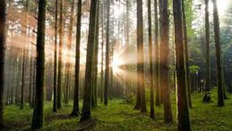 Foreste: il CREA e la FIDAF incontrano la delegazione cinese della National Forestry and Grassland Administration