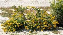 Venerdì Culturale 25.10.2019 – I pollini e la loro diffusione