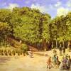 L'incendio nella pineta di Castelfusano e l'educazione civica