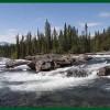 Otto lezioni sul restauro forestale