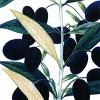 Con il genome editing si possono ottenere varietà come quelle che potrebbe produrre la natura. E che non sono OGM.