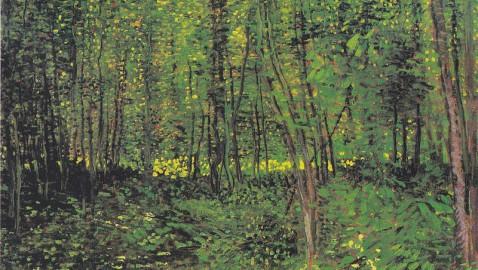 Basilicata, paese di foreste e di studi sulle foreste