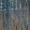 La cultura del bosco: tradizione e modernità