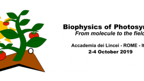 Biophysics of Photosynthesis: from molecules to the field