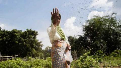 La FAO indica gli approcci agroecologici innovativi per la sostenibilità dei sistemi agroalimentari