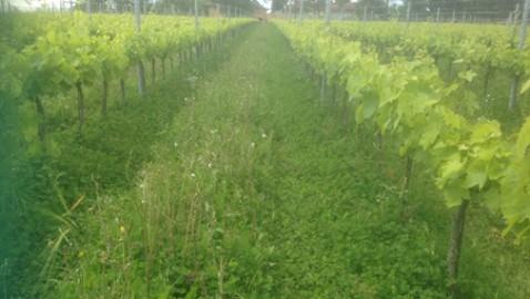Impronta carbonica e vitivinicoltura: un GOI per individuare e trasferire strategie viticole ad alta sostenibilità