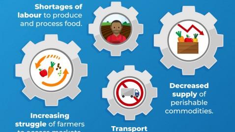 Q&A della FAO: Pandemia di COVID-19 – impatto su agricoltura e alimentazione