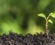 Il suolo e gli obiettivi di sviluppo sostenibile delle Nazioni Unite: sfide e necessità di azione