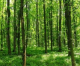 TUFF e pianificazione forestale