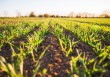 L'agricoltura ci salverà
