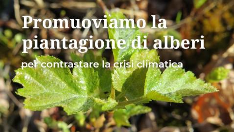 AlberItalia. Una Fondazione per passare dall'Appello all'Azione.