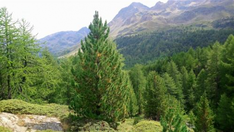 La riorganizzazione del Servizio Fitosanitario Nazionale nel quadro delle nuove sfide per la difesa delle piante: il Decreto Legislativo 2 febbraio 2021, n.19