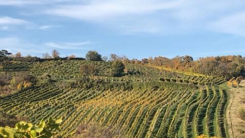 Digitalizzazione della produzione vitivinicola, una opportunità per la transizione ecologica del comparto