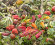 La riduzione di perdite e sprechi alimentari è necessaria e urgente, ma non sufficiente