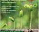 Transizione green, investimenti sostenibili per un'agricoltura sostenibile