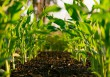 La percezione del suolo e lo sviluppo sostenibile