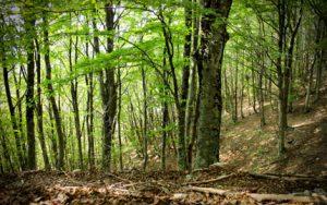 foreste_sm