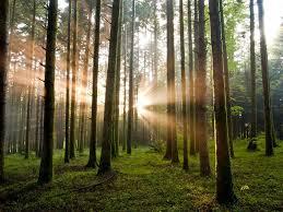 Bioeconomia delle risorse forestali 2