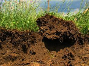 Erosione suolo