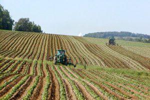 suolo_agricolo_lg