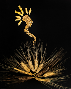 Durum Wheat genome Cover-Photo (1)