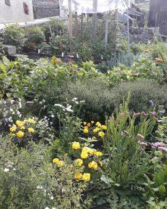 Esempio di orto giardino a Noiaretto Comeglians