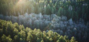 lifegate-deforestazione-720x340 (1)