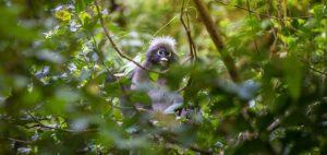 monkey-4834091_1280-720x340