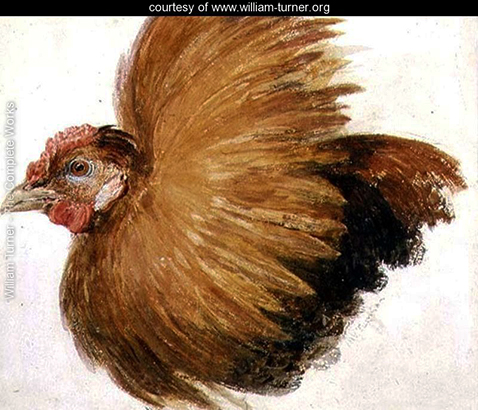 game-cock-from-the-farnley-book-of-birds